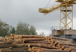 Третину усієї заготовленої деревини в Баранівському держлісгоспі переробляють у власному цеху переробки