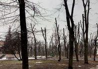 На Замковій горі підрізали дерева