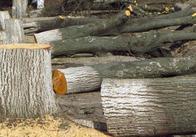 На Грушевського й Князів Островських порізали дерева