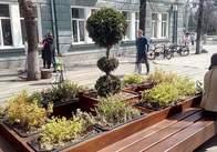 На Михайлівській - повертають лавки з декоративним озелененням