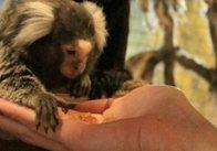 Контактний зоопарк Multizoo в ТРЦ Глобал - це чудове місце!