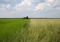 На Житомирщині 137 гектарів землі хотіли використовувати незаконно