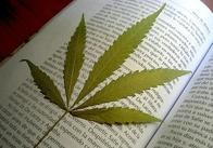 В ночные клубы Житомира некоторые посетители проносят марихуану. Криминальные новости Житомира