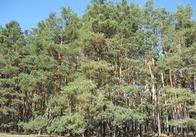 «Житомирське лісове господарство» визнано кращим державним підприємством України