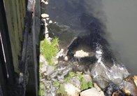 Річка Тетерів стала смердючим болотом (фото)