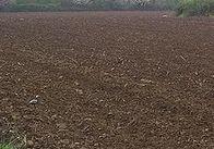 У Житомирській області продовжують самовільно займати землю