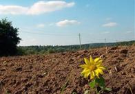 На Житомирщині продали землі на 15 мільйонів