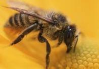 Живьем сгорели миллионы пчел!
