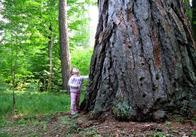 """Фотографія, яка перемогла у конкурсі """"Людина і ліс"""" на Житомирщині"""