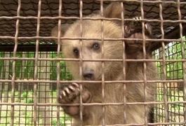 На Житомирщину з Луцького зоопарку привезли ведмежа