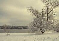 Житомирщина стала першою в Україні за висотою снігового покриву