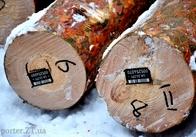Електронний облік деревини впроваджує Житомирщина. АУДІО. ФОТО. ЕКСКЛЮЗИВ