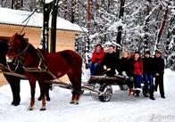 Живі ялинки напрокат пропонують на Житомирщині гуманні лісники. АУДІО. ФОТО. ЕКСЛЮЗИВ