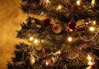 Новогодняя елка: живая, или искусственная? Житомиряне разделились в мнениях (предновогодний опрос Репортера)