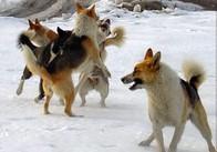 Николай Боровец: «Я отказываюсь отсвоих слов о том, чтобы рассмотреть привлечение охотниковдля истребления животных». В Житомире обсудили проблему бродячих собак
